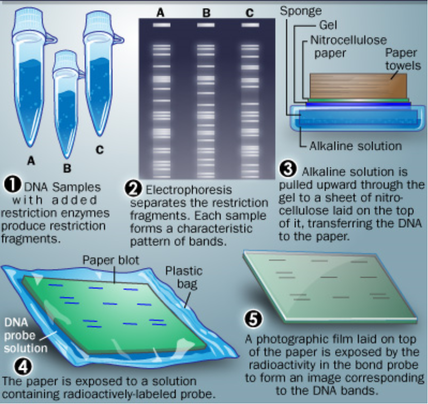 dna profiling forensic science
